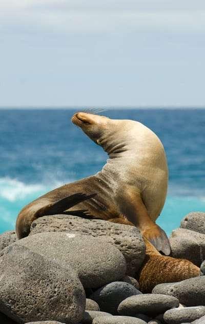 seal-yoga